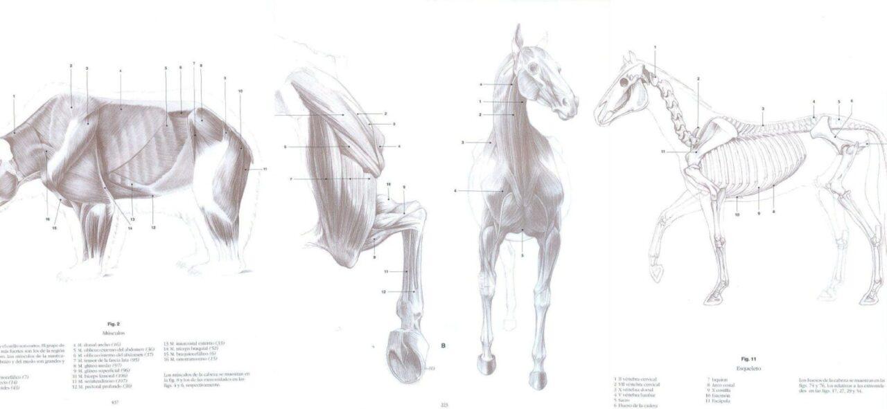 libros anatomía animal